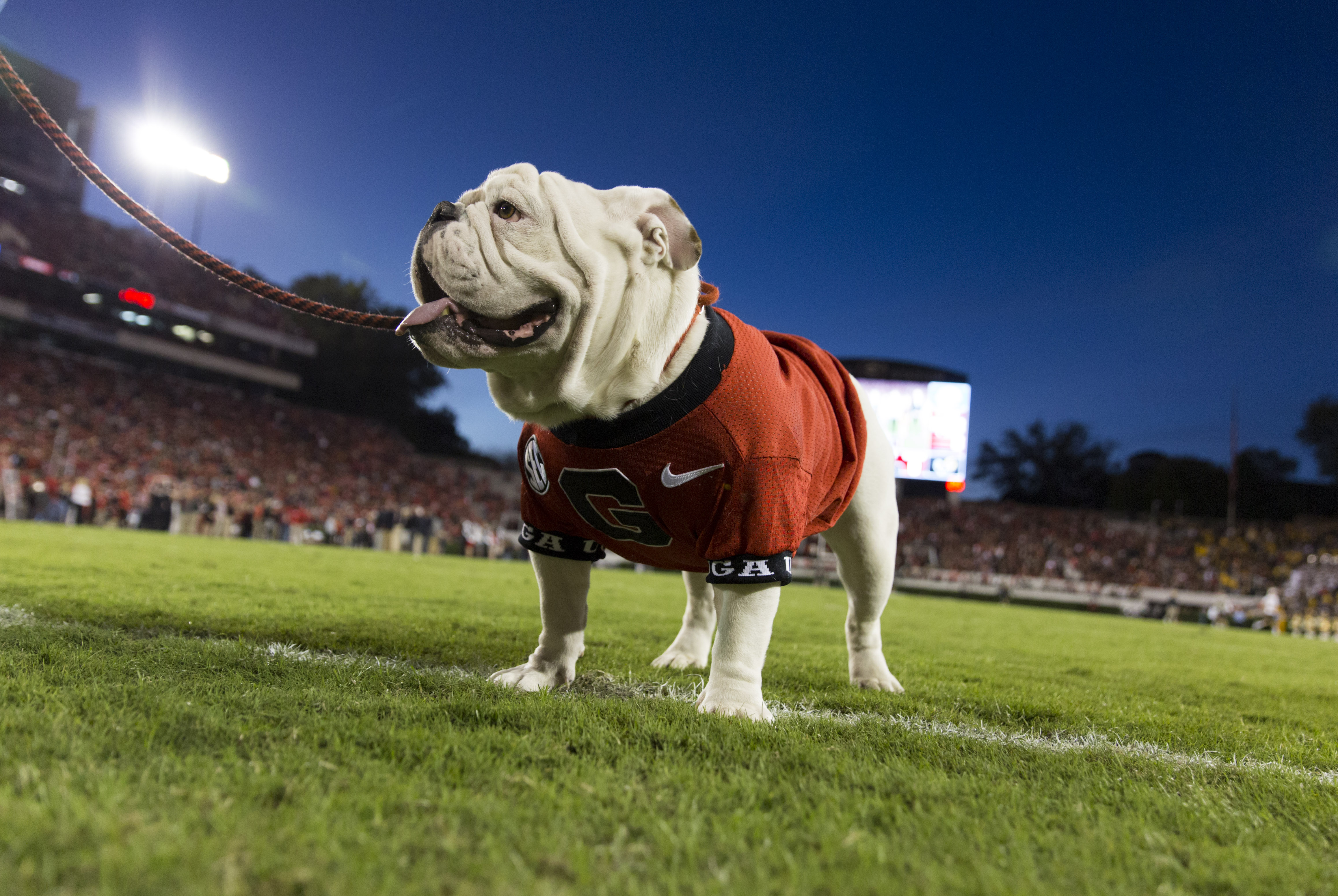 UGA College of Engineering | E-Day on G-Day